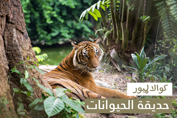حديقة الحيوانات في كوالالمبور زوو نيجارا من اهم الاماكن السياحية في كوالالمبور
