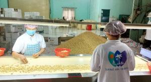 Raw cashews bulk supplier in vietnam